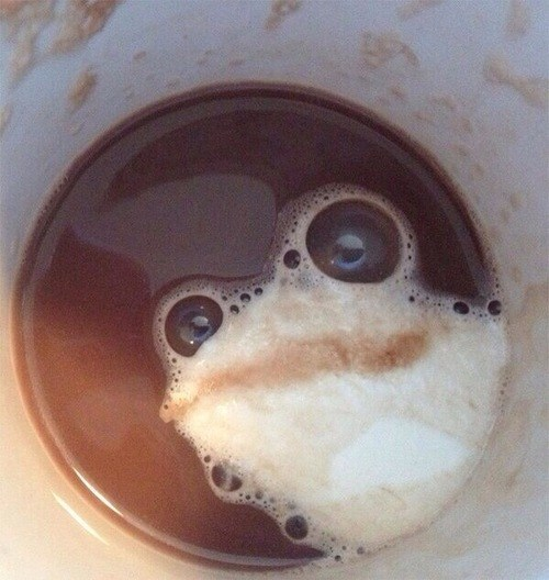 tags,coffee,latte art,frog