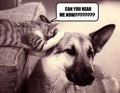 dogs ears friends Cats funny squeak