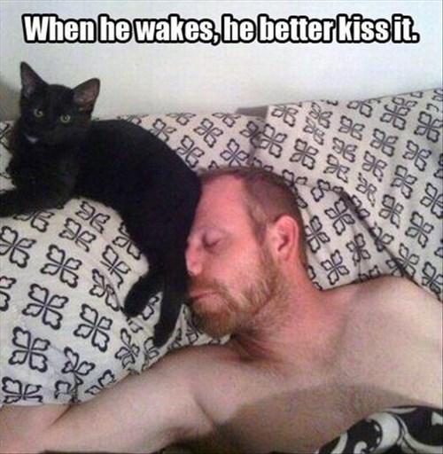 butt Cats funny KISS - 8004032000