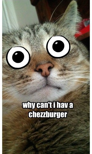 why can't i hav a chezzburger