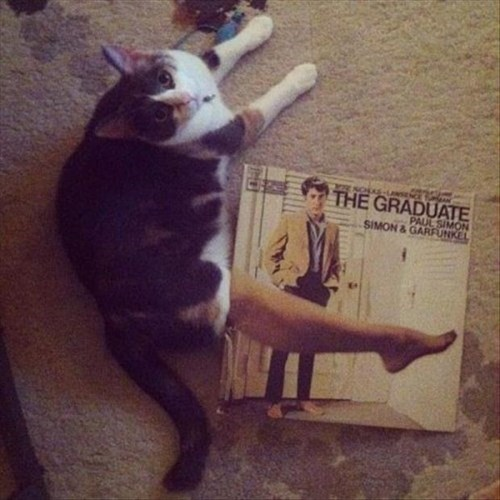 mrs robinson,movies,Cats,funny,the graduate