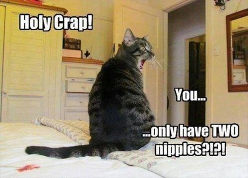 nipples,shocked,Cats,funny