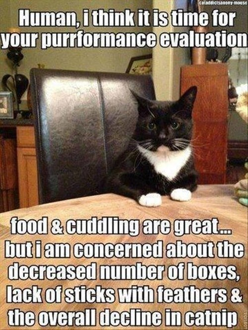 boxes feathers evaluation noms Cats funny - 8004531968