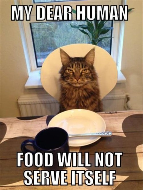 human,food,noms,serve,Cats,funny