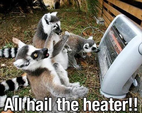 hail worship heater primates funny - 8004539648