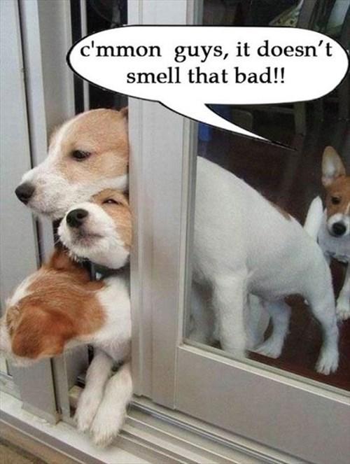 puppies cute stink air - 8004544000
