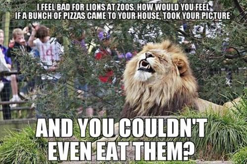 lions pictures pizza zoo metaphor - 8004564992