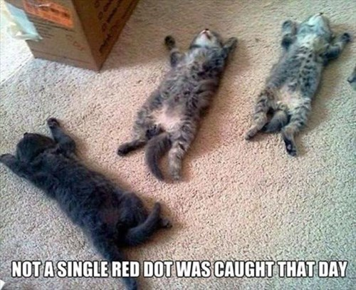 kitten red dot tired laser Cats