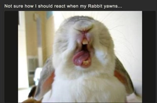 scary yawn teeth tongue rabbits
