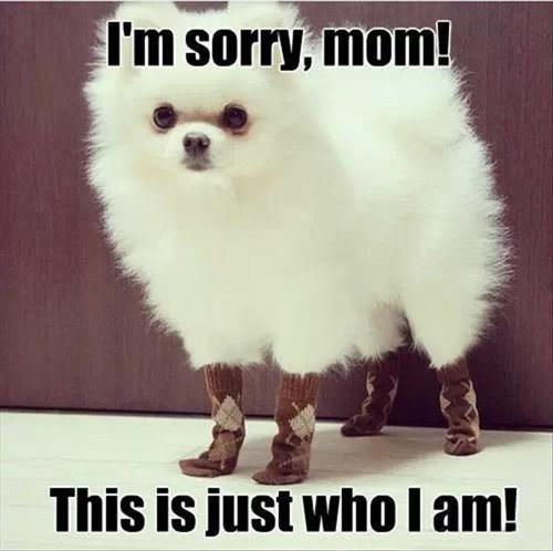 dogs fashion socks argyle style funny - 8004586752