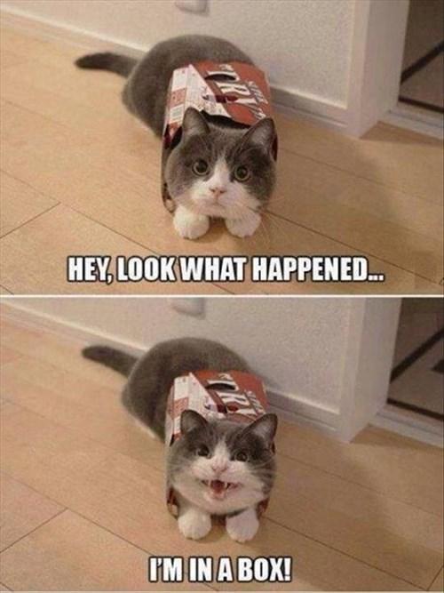 box cute Cats funny - 8004589312