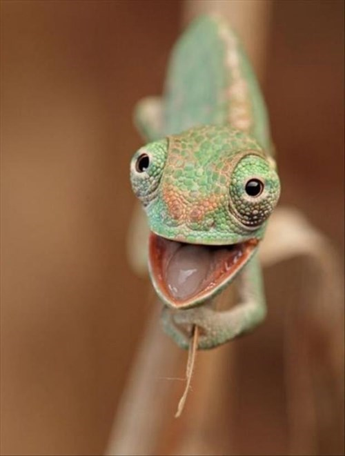 lizards puns cute chameleons happy smile - 8004603904
