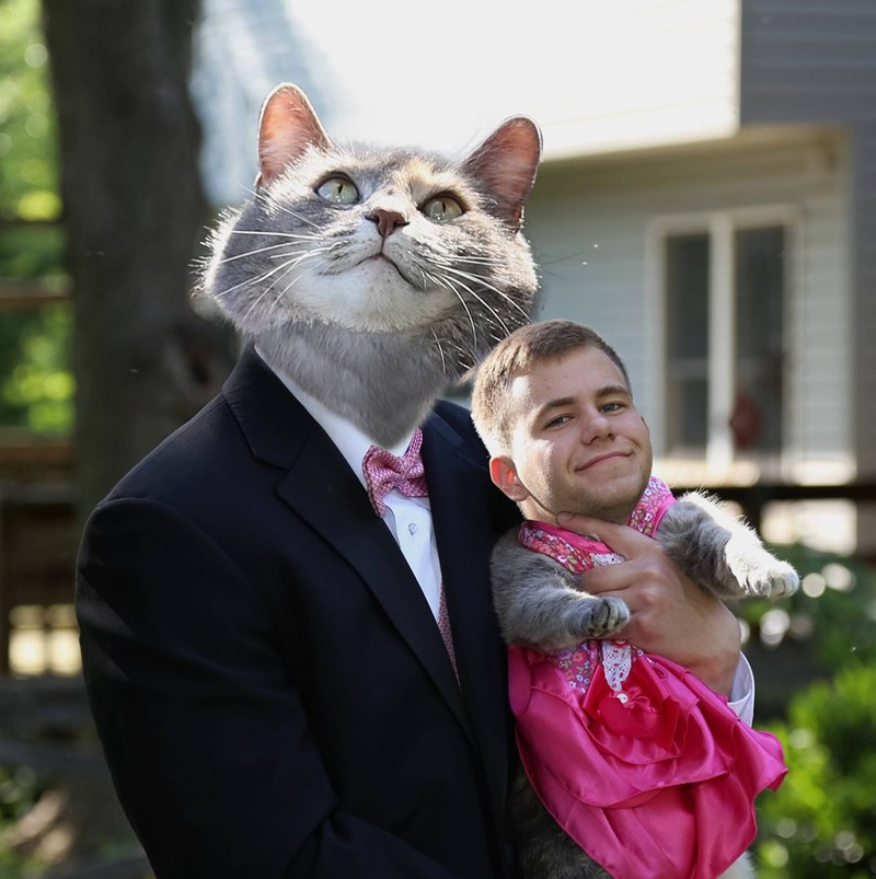 photoshop,prom,Cats,photoshop battle