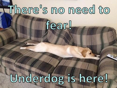 dogs lazy underdog sleep funny - 8005279232