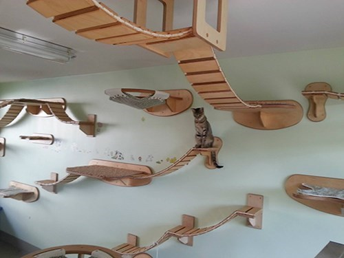 amazing Cats bridges structures architectures