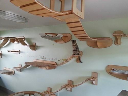 amazing Cats bridges structures architectures - 8005553664