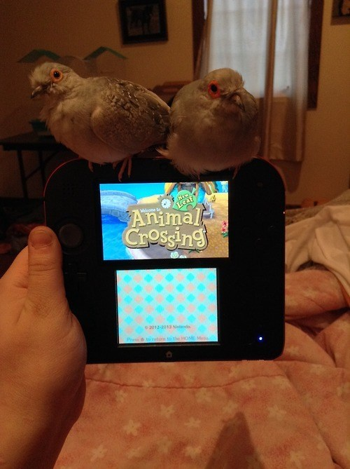 3DS,animal crossing,nintendo,IRL