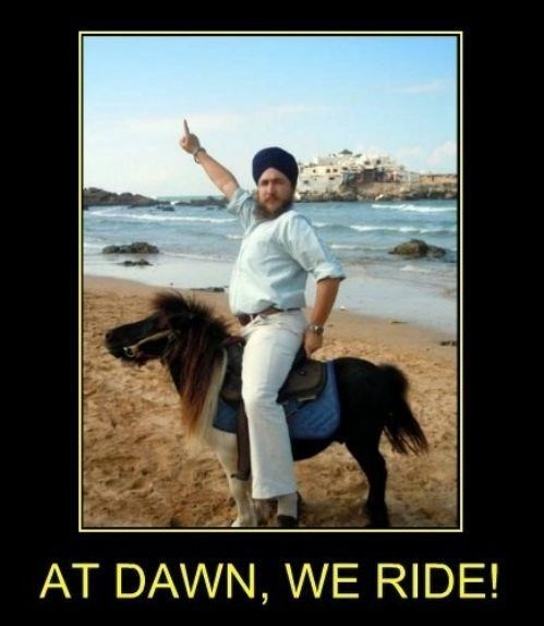 at dawn we ride horse funny pony - 8005634048