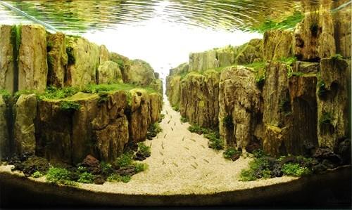 aquarium,design,landscape