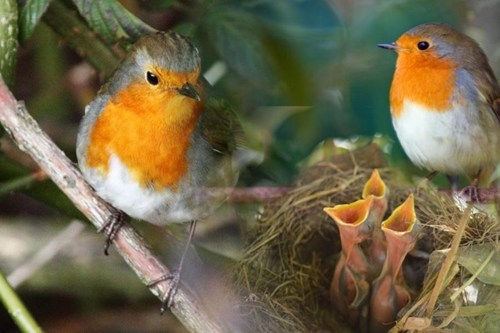 cute,family,food,feeding time,eat,robins,noms