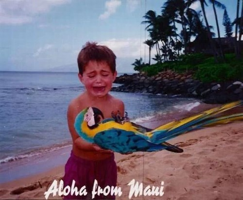 beach,funny,Hawaii,parrots,photo op