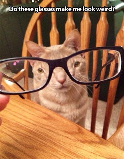 nerds smart glasses Cats funny - 8006065408