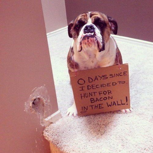 dogs shaming funny bacon