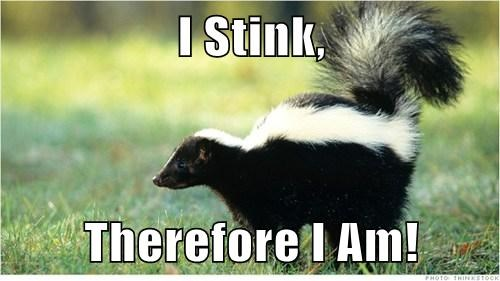 puns,philosophy,stink,skunk