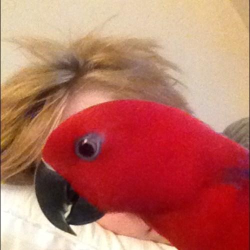photobomb,parrots