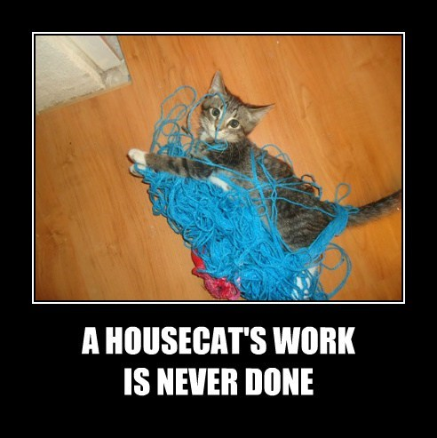 Cats help knit housecat
