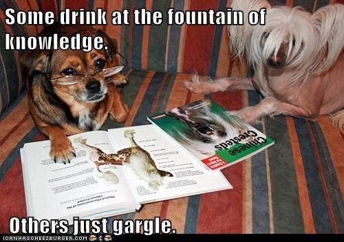 Cheezburger Image 8007532800