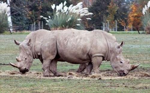 rhinos photobomb - 8007626240