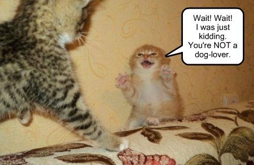Cats funny kitten tease - 8007691520