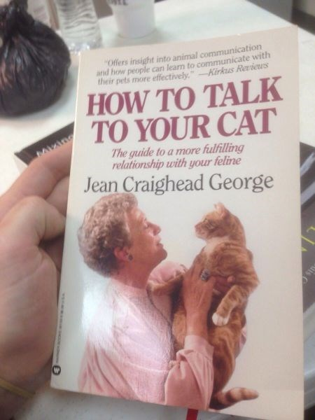 cat crazy cat lady how to talk to your cat - 8007897088