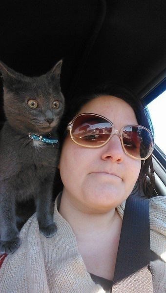Cats driving kitten selfie - 8007898368