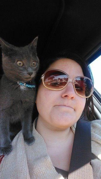 Cats driving kitten selfie - 8007898368