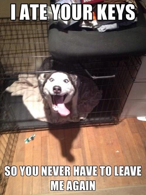dogs eat funny keys - 8007901184