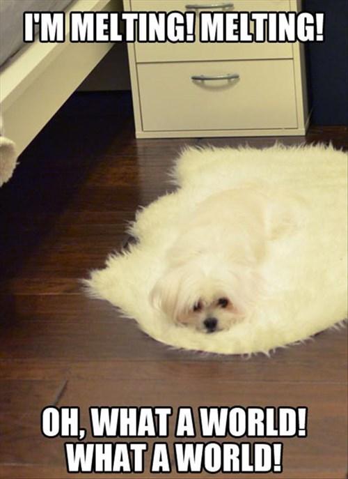 dogs funny imitation melting wizard of oz - 8007913728