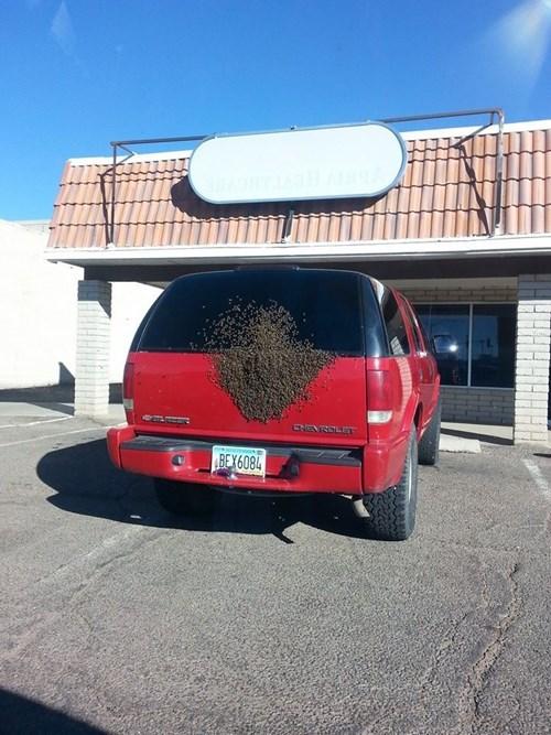 bees cars bad idea Kill It With Fire NO NO NO NO NO - 8007921152