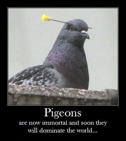 animals funny immortal screwed pigeons wtf - 8007932672