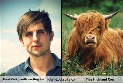 micah carli Hawthorne Heights emo totally looks like cows - 8007940352