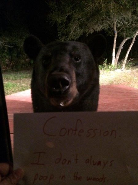 bears,sign,pet shaming