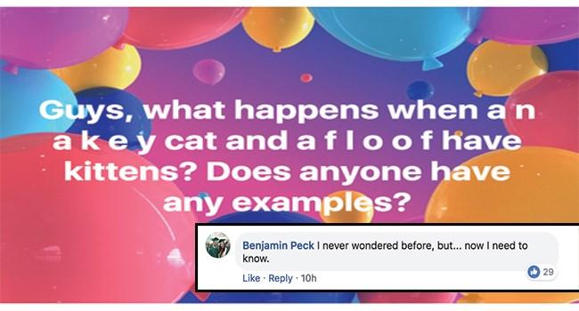 cat facebook