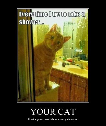 cat wtf no no tubes funny animals - 8009188608