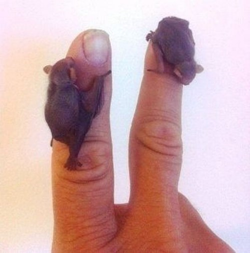 Babies learning bats fingers cute hands