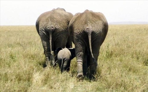 Babies bums cute butts elephants family - 8009415168