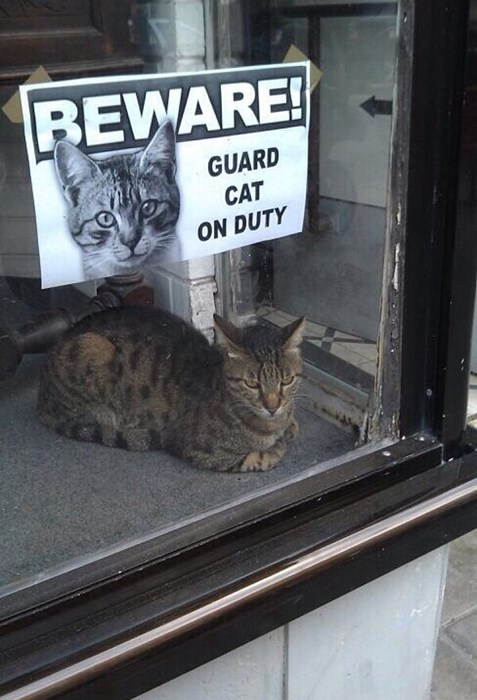 beware guard cat Cats funny - 8009436416