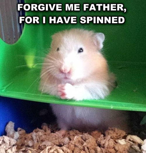 cycle,sin,puns,hamsters