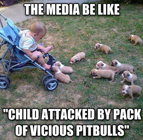 the media,news