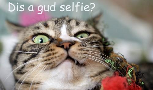 selfie Cats funny - 8010306304